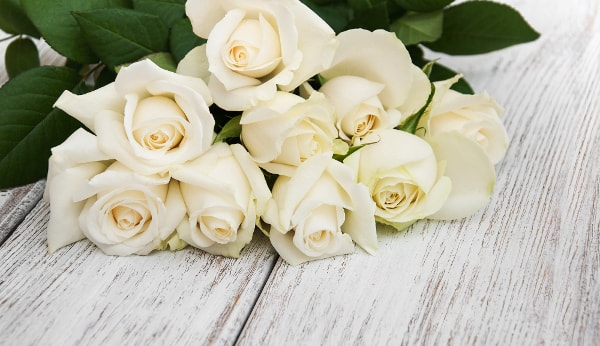 Descubre Qué Significan Las Rosas Blancas Florachic